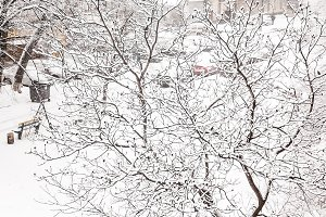 Trees under a thick layer of snow on