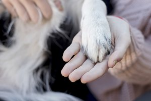 A Woman hand and dog paw together