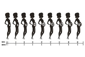 Pregnancy stages. Silhouettes of