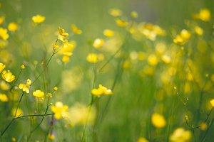 Summer flowers #1