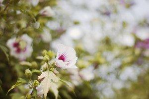 Spring summer bush with bokeh