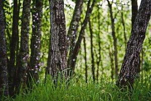 iseeyouphoto forestflowers.jpg