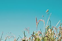 iseeyouphoto meadowflowers.jpg