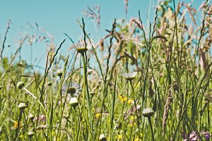 iseeyouphoto meadowflowers.jpg