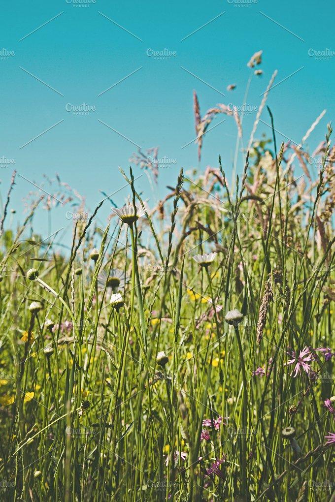 iseeyouphoto meadowflowers.jpg - Nature