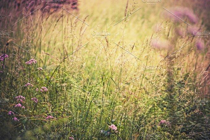 iseeyouphoto pinkmeadow.jpg - Nature