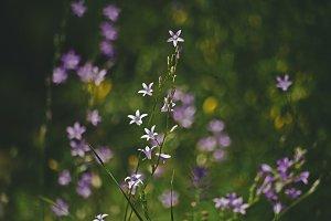 iseeyouphoto wildflowers.jpg