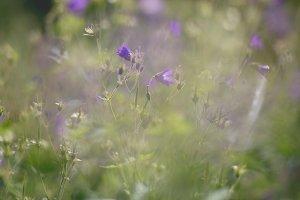 Summer flowers #5