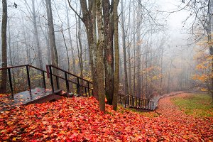 Red autumn forest mist stairway view