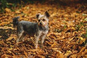 Puppy in Autumn Woodland
