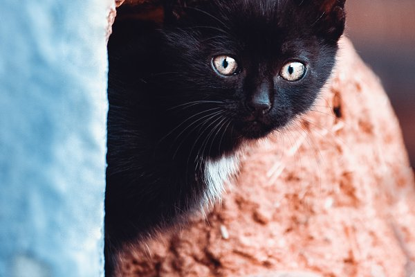 Animal Stock Photos: Perpis - portrait of a kitten