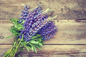 Bunch of blue lupine flowers
