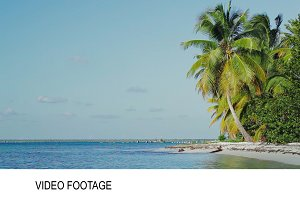 Exotic scene with palms and sea.