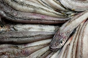 Hake in the market