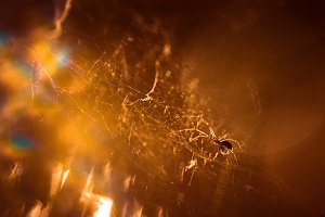 spider is sitting on a cobweb close-