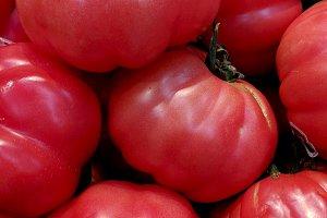 Fresh ripe organic tomatoes