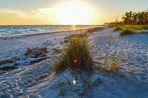 Tall Grass on the Beach