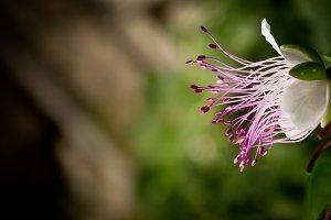 Pink Spaghetti Flower Bloom