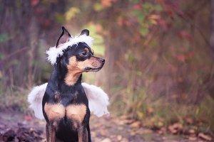 Angel dog, portrait of a dog