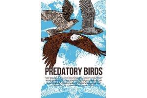 Eagle, falcon and hawk birds