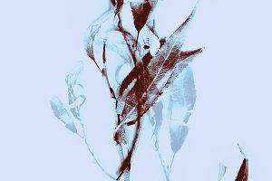 dry autumn branches pattern | JPEG