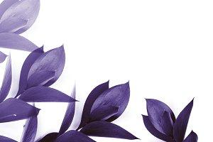 purple leaves on twigs isolated on w