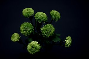 beautiful green flowers isolated on