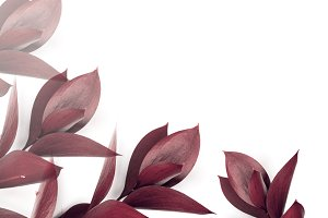 burgundy leaves on twigs isolated on