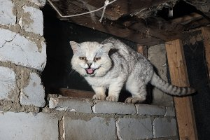 Scary sick cat in a dirty basement