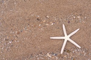 Starfish on sandy beach in summer