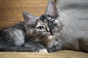 Portrait of a cute kitten. The