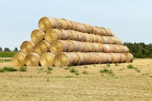 cylindrical stack of straw