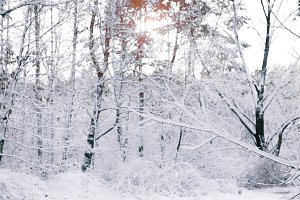 beautiful trees covered with snow in