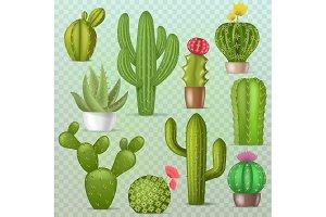 Cactus vector botanical cacti green