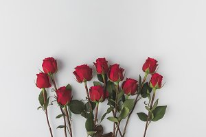 top view of arranged red roses isola