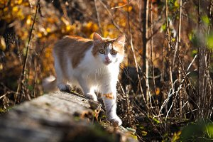 Portrait of a cat in the autumn