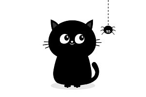 Black cat looking at hanging spider.