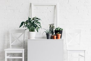 house decor with houseplants in fron