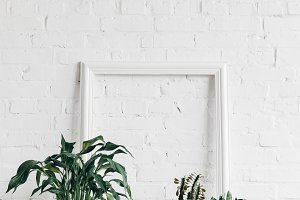 houseplants with empty frame on whit