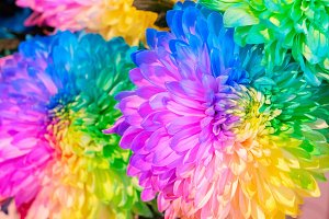 natural flowers background