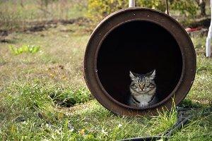 Cat in barrel