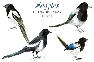 Watercolor Magpies Clipart