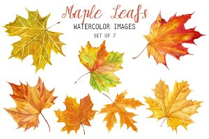 Watercolor Maple Leafs Clipart