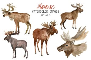 Watercolor Moose Clipart