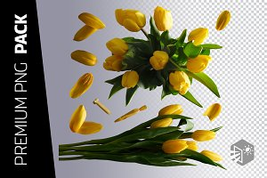 10 YELLOW TULIPS PNG IMAGES
