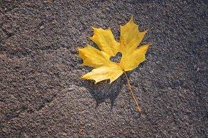 beautiful autumn leaves. Golden autu