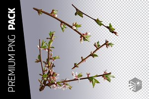 4 CHERRY BRANCH PNG IMAGES