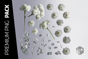 35 CARNATION FLOWERS PNG IMAGES