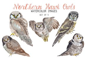 Watercolor Northern Hawk Owl Clipart