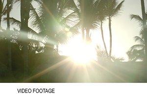 Bright evening sun shining among
